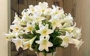 6 loại hoa đẹp xuất sắc nhưng chứa chất kịch độc gây chết người