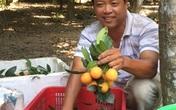 Thanh trà miền Tây tăng giá 60.000 - 70.000 đồng/kg