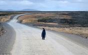 Chim cánh cụt lang thang tìm đường về nhà