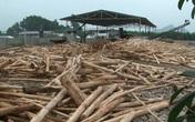 """Nghệ An: Ai bảo kê cho một loạt xưởng gỗ dăm hoạt động """"chui"""" hoạt động?"""