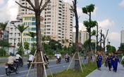 Hà Nội: Cây xanh chết la liệt trên đường Trần Hữu Dực