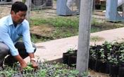 Lão nông lãi 1,5 tỷ đồng/năm từ trồng nho dại