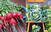 """Tháng 10, trồng rau củ gì lên """"mơn mởn"""" mà cả nhà ăn mãi không hết?"""