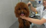 """Kiểu nuôi chó sang chảnh của đại gia Việt khiến nhà nghèo cũng phải """"chạnh lòng"""""""