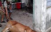 """Đà Nẵng: Người dân bức xúc vì lò mổ """"chui"""" giữa khu dân cư"""
