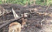 Nghệ An: Xem xét kỷ luật 10 cán bộ liên quan đến việc phá rừng