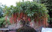 Những loại cây bạn nhất định phải rước về nhà Tết này để đón nhiều tài lộc