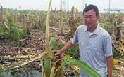 Giám đốc thuê côn đồ chém hơn 2.000 cây chuối ở Hải Phòng sẽ bị xử lý thế nào?