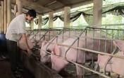 Dân nuôi lợn lao đao, người tiêu dùng vẫn thiệt