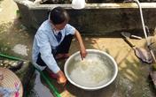 Bình Lục (Hà Nam): Dân phải dùng nước bẩn từ dự án nước sạch trị giá 90 tỷ