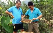 Thu vài trăm triệu đồng/năm từ mật ong