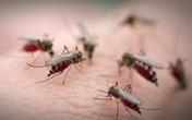 Lý do tại sao một số người lại thường bị muỗi đốt nhiều hơn người khác