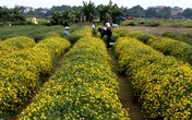 Nữ sinh nườm nượp rủ nhau kiếm tiền trên cánh đồng hoa đẹp như mơ