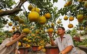 Bưởi Diễn bán vỉa hè Sài Gòn giá 25 triệu đồng một cây