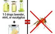 3 cách an toàn để 'xóa sổ' côn trùng tại nhà