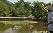 Cụ ông U80 trồng cây, nuôi cá thảnh thơi, vừa chơi vừa có tiền