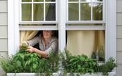 10 ý tưởng cực thông minh để có một vườn rau gia vị nhỏ trong bếp