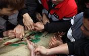 Hàng trăm thanh niên giẫm đạp, cướp chiếu cầu quý tử trong lễ hội 'Đúc Bụt' đầu năm