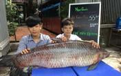 Bắt được cá trắm đen khổng lồ: Của hiếm chưa từng thấy, đại gia mua ngay