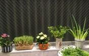 Vườn rau gia vị độc đáo trồng trong lọ và cốc thủy tinh của mẹ Việt hai con ở Nhật