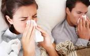Mách bạn cách phòng chống virus cúm A H5N1/ A H1N1 với tinh dầu tràm
