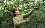 Bỏ bạch đàn, trồng 5ha chanh leo, chị nông dân lãi 200 triệu