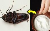 6 mẹo đơn giản đuổi bay gián, bọ khỏi nhà