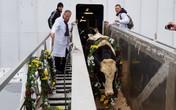 Tập đoàn TH đón đàn bò sữa cao sản HF đầu tiên nhập khẩu từ Mỹ về trang trại tại Moscow-Liên bang Nga