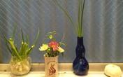 Rau gia vị trồng bon sai trong căn bếp Việt ở Nhật