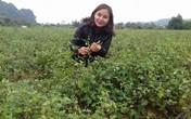 Hotgirl Hòa Bình trồng cây dại, mỗi tháng bỏ túi hàng chục triệu đồng