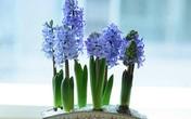 """5 loại hoa được """"săn lùng"""" nhiều nhất Tết Kỷ Hợi"""