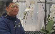 8X đất cố đô kiếm bộn tiền dịp Tết nhờ trồng lan hồ điệp