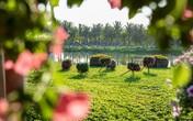 Tết này chơi đâu: Đến Ecopark du xuân cắm trại tại công viên ven vịnh hồ lớn nhất miền Bắc