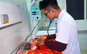 Nghệ An: Sản phụ sinh 3 nhờ phương pháp thụ tinh trong ống nghiệm
