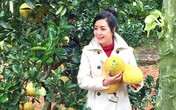 NSƯT Chiều Xuân thu hàng nghìn quả bưởi từ vườn ở ngoại ô