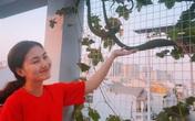 """Ngọc Lan và Thanh Bình từng khiến người người ghen tỵ khi cùng nhau thu hoạch rau ở """"nông trại"""" trên sân thượng mà giờ đã đường ai nấy đi"""