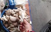 Nấm tươi bày bán la liệt ở chợ dân sinh dễ có độc tố
