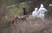 Cái chết bí ẩn của người đàn ông giữa cánh đồng với những vết thương khủng khiếp được gây ra một phần bởi chó săn