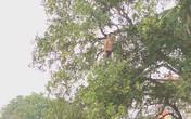 29 Tết, mẹ già phải leo xe thang thuyết phục con trai cố thủ trên ngọn cây ở Ninh Bình