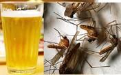 Thực hư mẹo dùng bia bắt sạch muỗi trong nhà