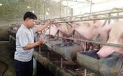 Nhiều biện pháp ngăn chặn dịch tả lợn châu Phi