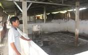 Hình ảnh tan hoang từ ổ bệnh dịch tả lợn châu Phi ở Hải Dương