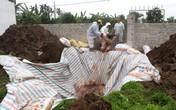 Tỉnh Hải Dương hiện có bao nhiêu huyện xuất hiện bệnh dịch tả lợn châu Phi?