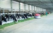 Hành trình đi đến Top tăng trưởng nhanh nhất Việt Nam của Công ty bò sữa Việt Nam thuộc Vinamilk