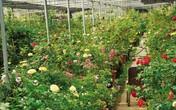 Khám phá những nhà vườn tại làng hoa Xuân Quan