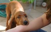 Bé trai bị gần 10 con chó tấn công ở Hưng Yên đã tử vong