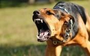 Những tình huống chó rất dễ tấn công người