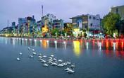 Hải Phòng: Thời tiết nóng nực, thiên nga nằm gục trên sông Tam Bạc