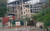 Hà Nội: Quận xin chặt 4 cây xà cừ, Sở Xây dựng ngâm hồ sơ gần 4 tháng