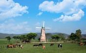 """Review """"tour"""" tham quan trang trại bò sữa siêu hot: gợi ý tuyệt vời cho gia đình hè này"""